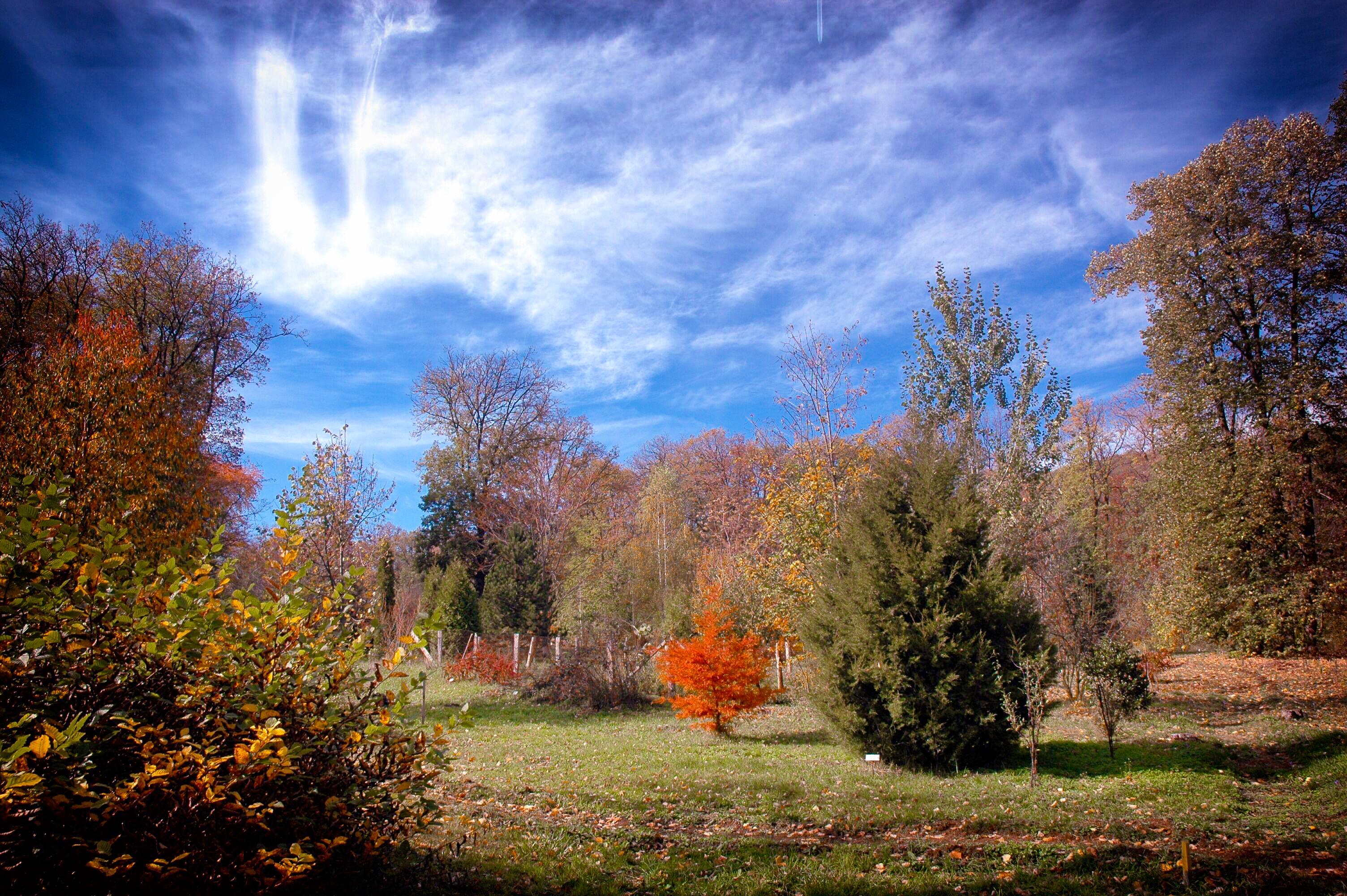 Park-arboretum